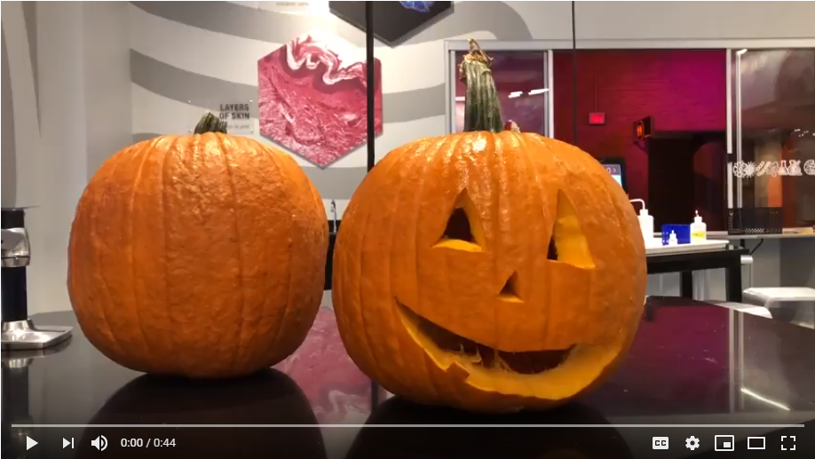 How To Preserve Your Pumpkin Still