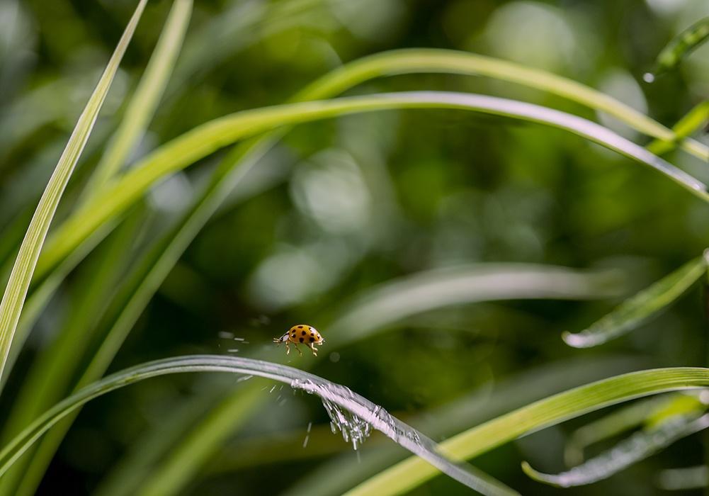 Backyard Wilderness Fps Ladybug Splash
