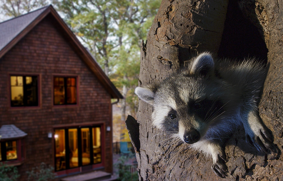 Backyard Wilderness Fps Raccoon House