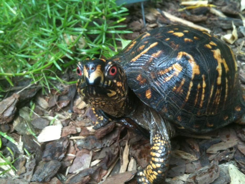 Dpn Creature Cavern Turtle