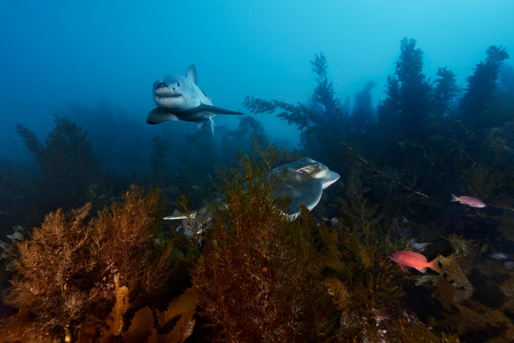 MM8287_150515_12038 Brian-Skerry