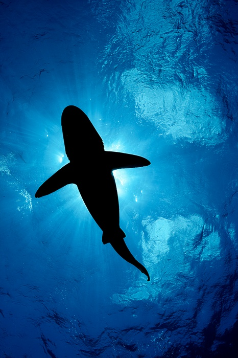 MM8288_140516_01316_CR-Brian-Skerry