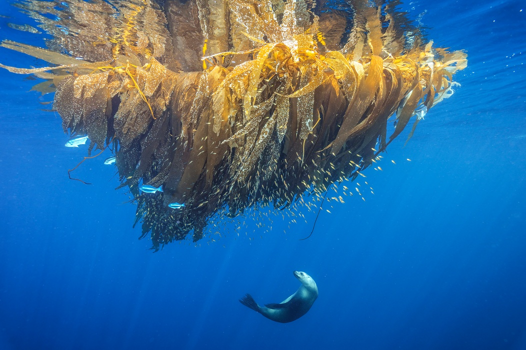 MM8471_160418_01220 Brian-Skerry