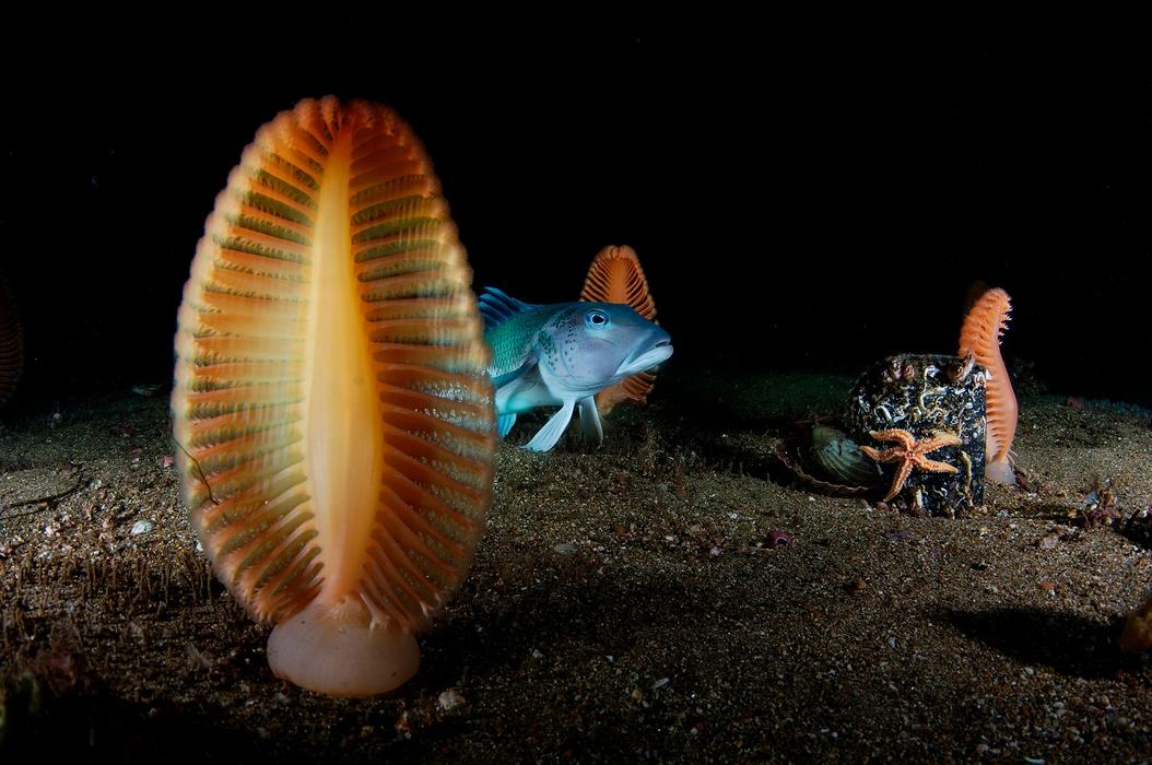 Seapens Brian-Skerry