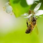 Bee Card