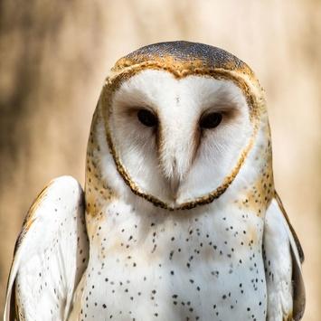 barn-owl-face_180802_195931.jpg