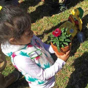 Gardening Inset