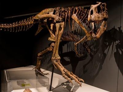 Tyrannosaurs Inset