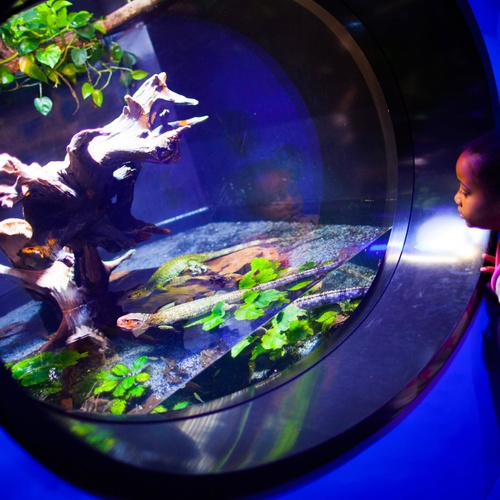 Aquarium Girl At Tank