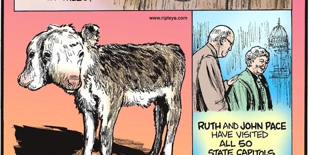 Ripleys Cartoon