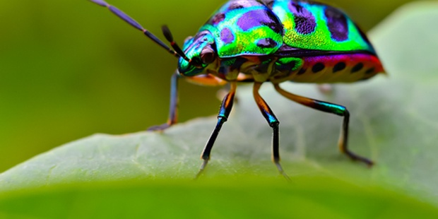 Jewel Bug 500 X 300