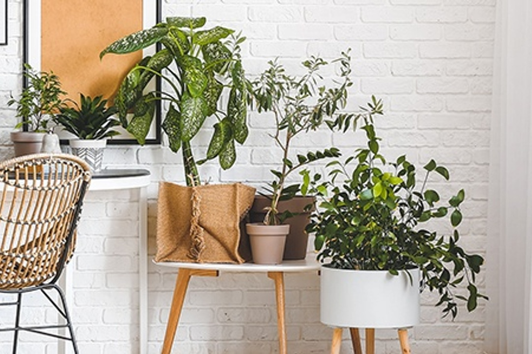 15 Green Home Ideas for Eco Enthusiasts