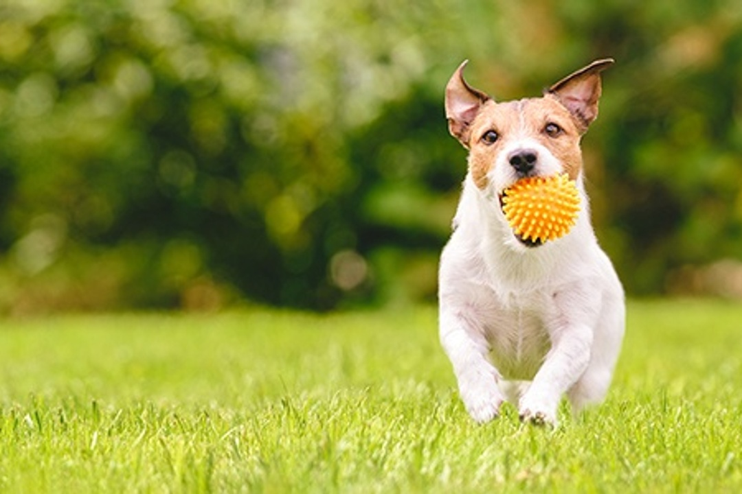 Pet Proofing Your Yard: The Ultimate Guide