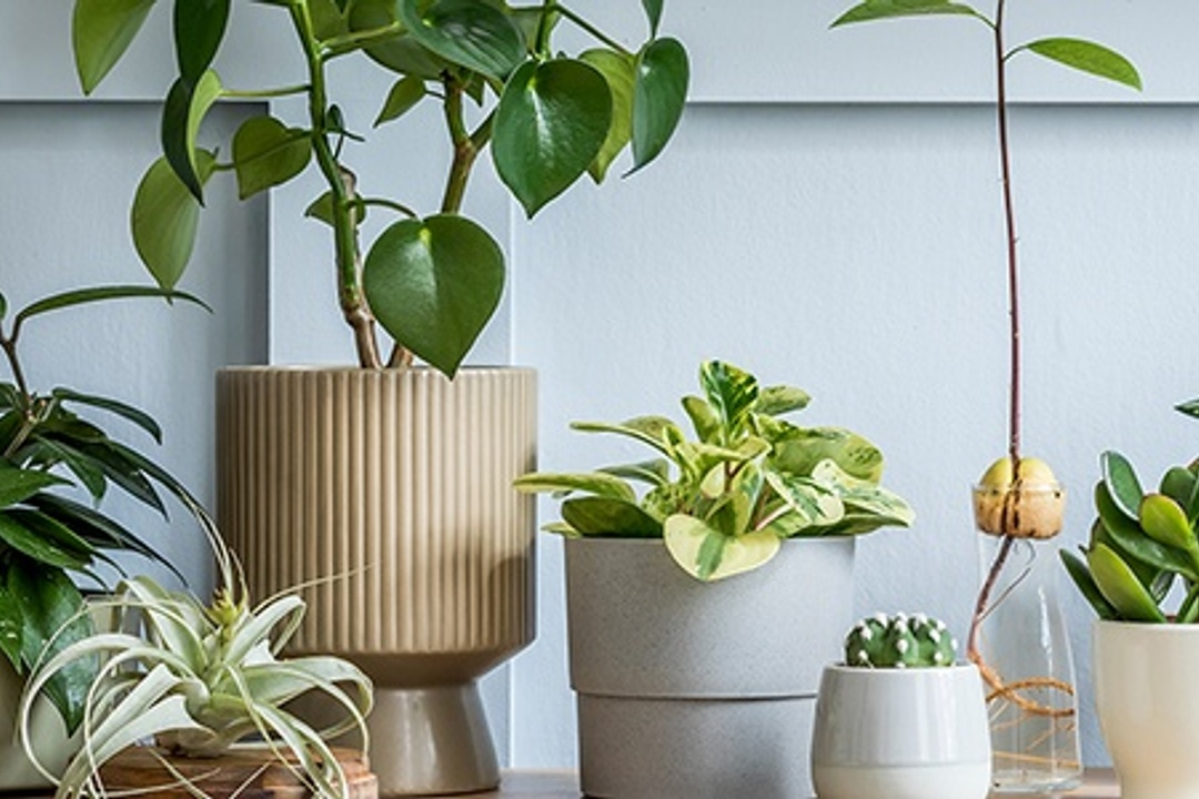 20 Pet Safe Houseplants for Animal Lovers' Homes (And 10 Toxic Ones to Avoid)