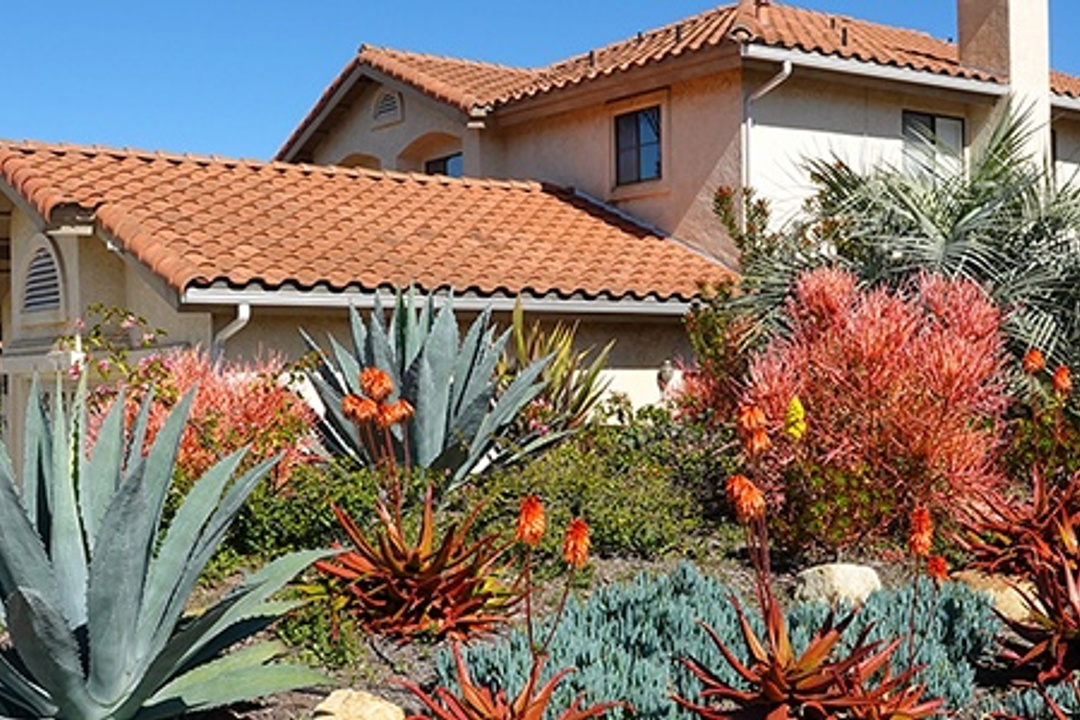 15 Xeriscape Ideas for Texas: Save Money and The Planet With This Gardening Design
