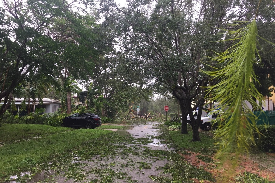 Hurricane Irma Coconut Grove update