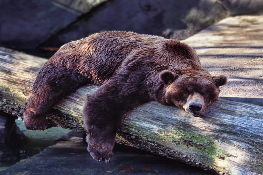 Real Estate Agents Hibernate – Buyers Don't