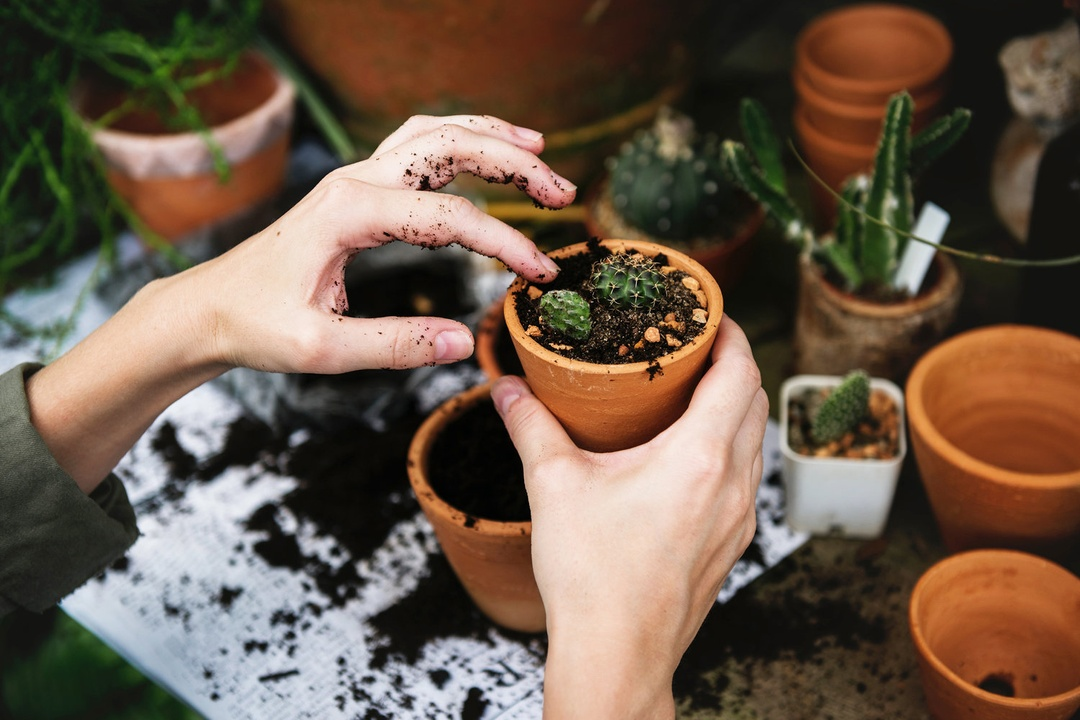 Bring Your Landscaping to Life: The Best Gardening Stores in Austin