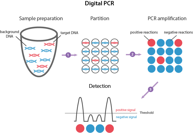global digital pcr market This report studies digital pcr-dpcr in global market, especially in north america, china, europe, southeast asia, japan and india, with production, revenue, consumption, import and export in these regions, from 2013 to 2018, and forecast to 2025.
