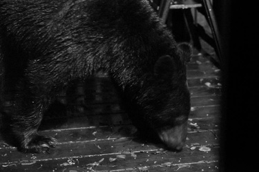 Bear! On the Porch!