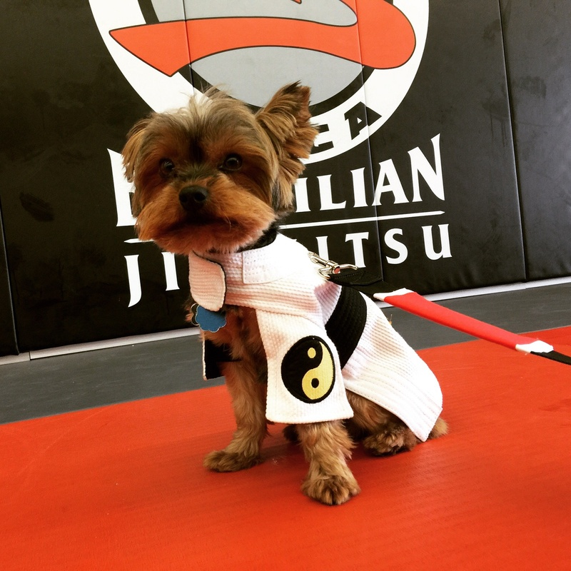Dogs of Jiu Jitsu