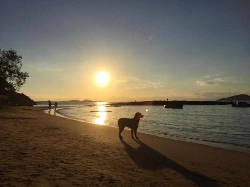 Praia da Tartaruga, 2016