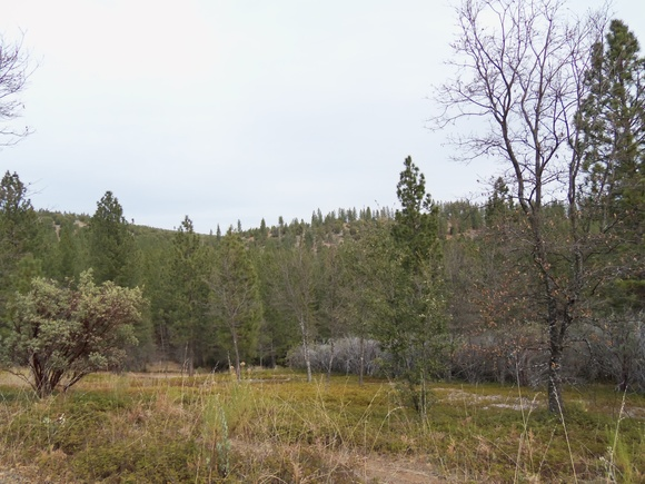 20 rural acres of mixed pine/oak forest land near Yosemite National Park, surrounded by Stanislaus National Forest with no neighbors and sweeping vistas of the Sierra Nevada mountains. The crew will need to provide their own generators for electricity. Potable water is nearby but not at the base camp sites (but can be driven there easily). Other primitive amenities are available. The location is approx. 6 hours north of Los Angeles. Perfect for westerns, survival stories, campground murder flicks, and now with bonus post-apocalyptic dead trees. Camping areas, access to National Forest. Location scouting required due to varied terrain and nature of site, please give plenty of advance notice.