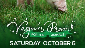Vegan Prom