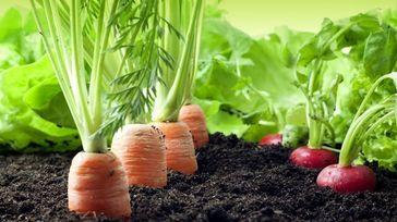 AgriBusiness-Training