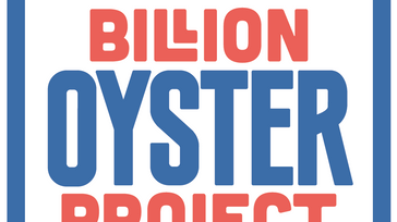 Billion Oyster Party