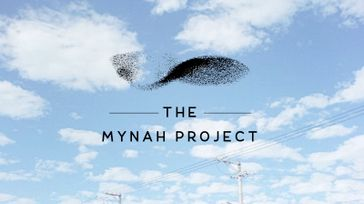 The Mynah Project