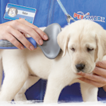 Puppy Trim Petsmart Pet Services Recommended