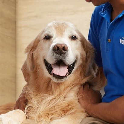 Dog Grooming Petsmart Pet Services Recommended