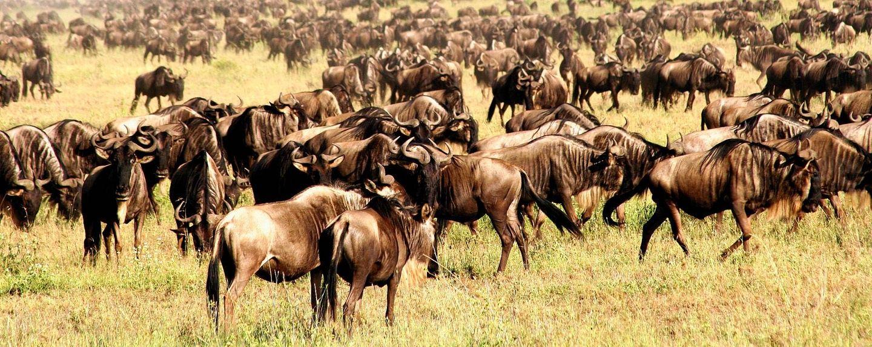 7 Days - Serengeti Wildebeest Migration Safari join group