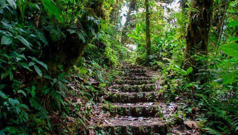 Rainforest Radiance Yoga Retreat