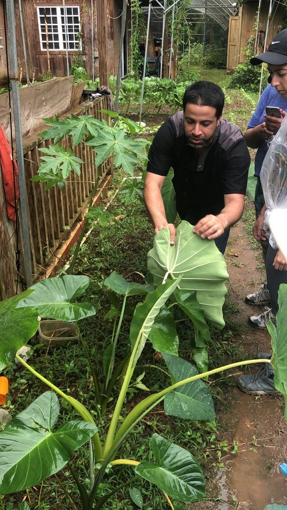 Exploring Food Systems in Puerto Rico: Post-Maria