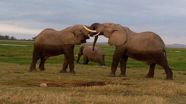 """Day The """"Big Five"""" Adventure Safari"""