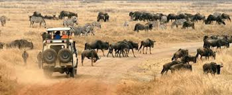 4 days masai mara and lake nakuru group joining camping safari