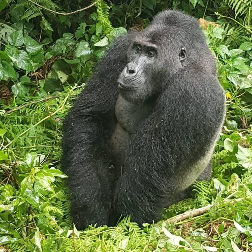 2 Day Gorillas Trekking in Uganda