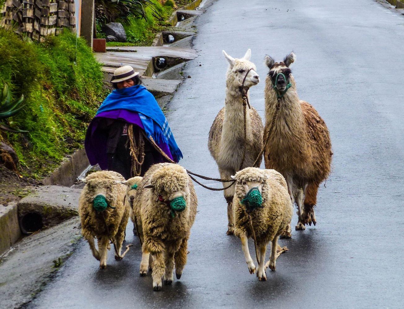 4 DAYS MAGIC ECUADOR Cuenca to Quito