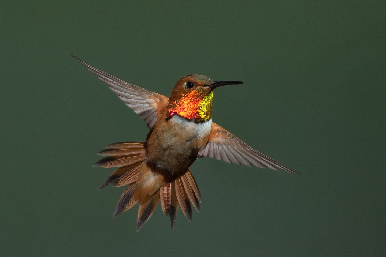 The Ultimate SE Arizona Hummingbird Photography Tour