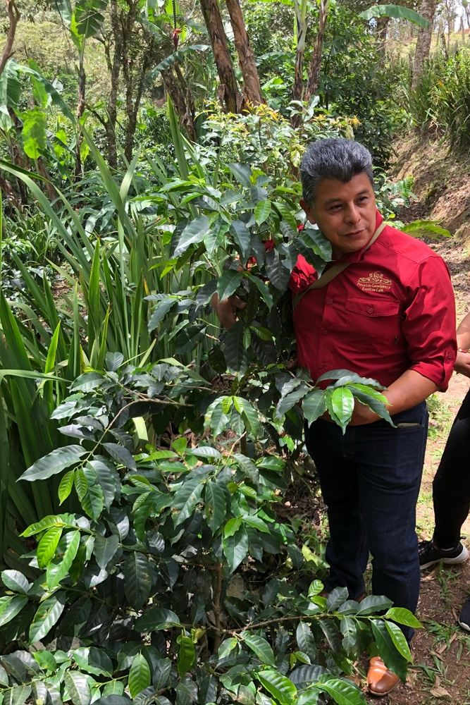 Coffee in Honduras: Entrepreneurship, Climate Change, & Culture