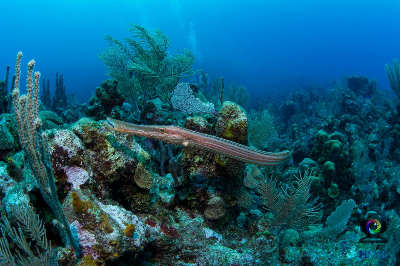 Roatan Dive Trip 2021