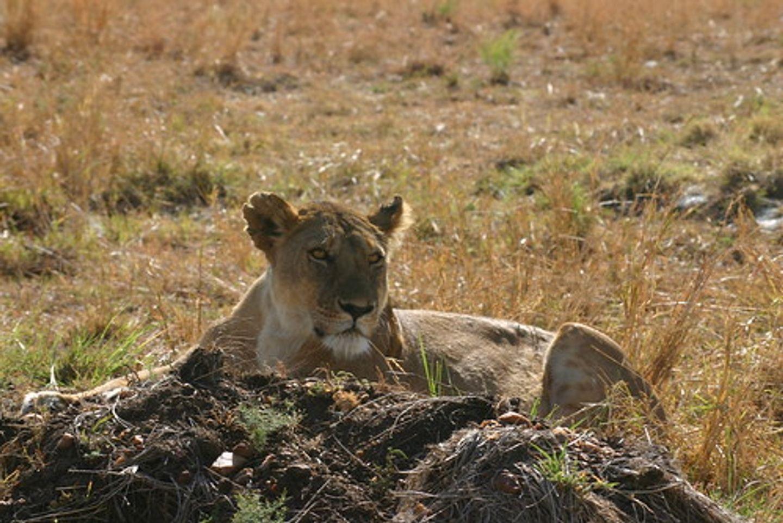 Tanzania Six Days Safari Itinerary for Arusha N.P, Manyara, Tarangire