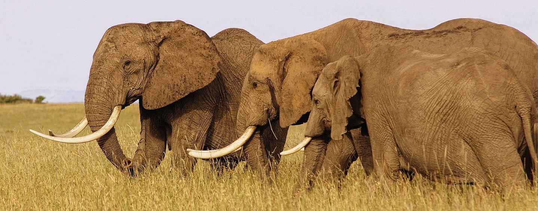 8-Day The Best of Tanzania Wildlife Safari and Zanzibar Island