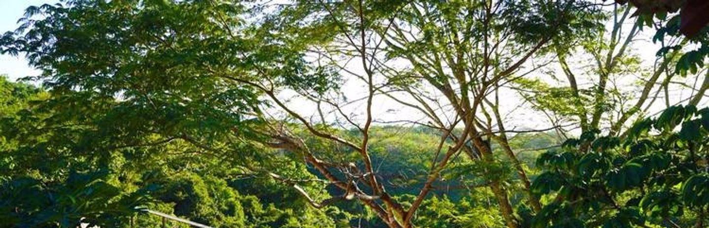 Costa Rica Retreat | Real Life Yoga
