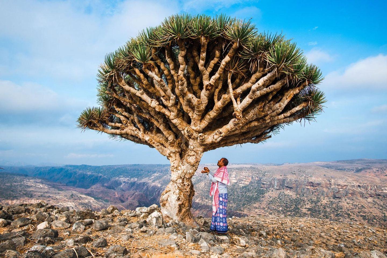 Socotra Tour,