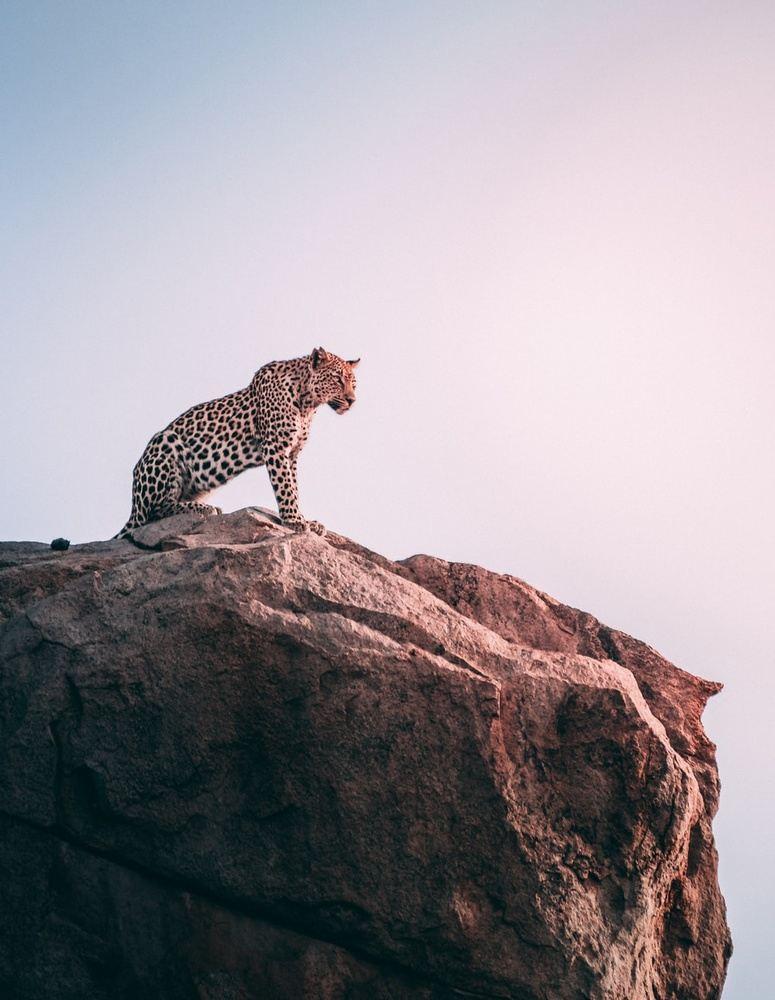 5 Day Kruger National Park Safari