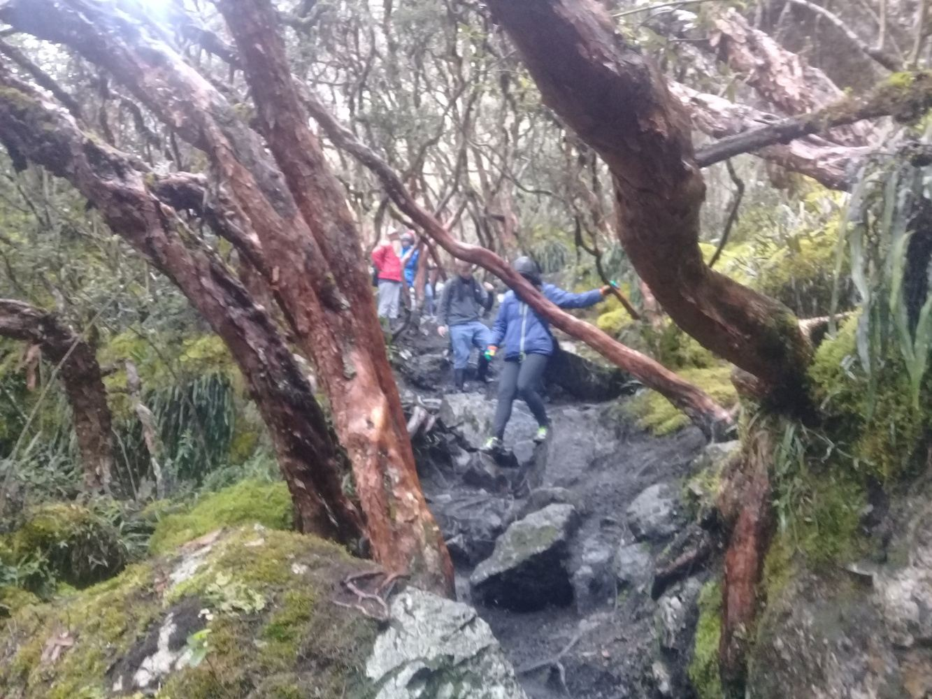 Wonderful Cajas National Park