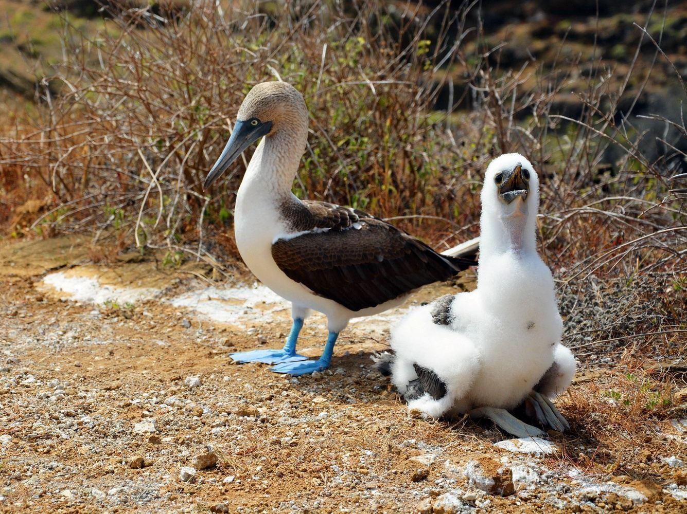 Tour Isla Lobos - Lobos Island